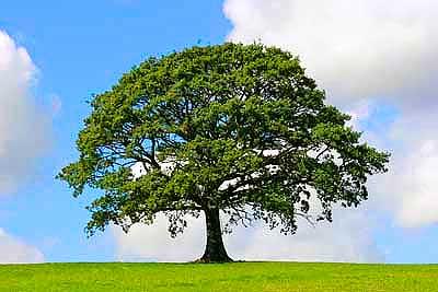 Традиции немецкой свадьбы: Дерево как символ брака