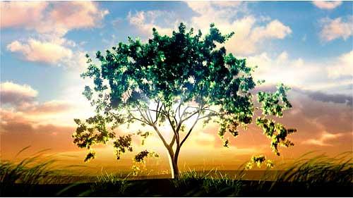 какие деревья садят на свадьбу