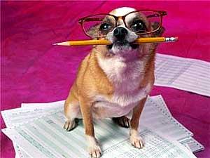 анекдоты про умных собак