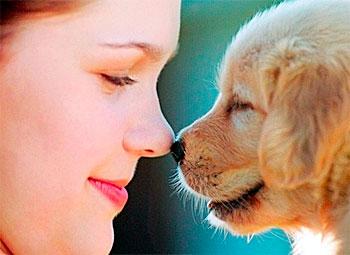 дружба с собакой