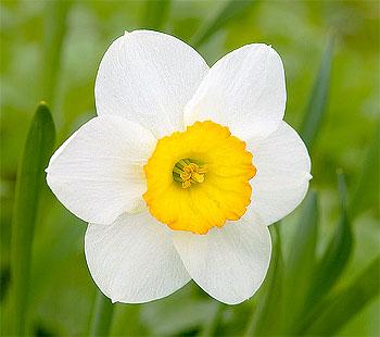 Беленький цветочек: Проверьте себя на нарциссизм обыкновенный