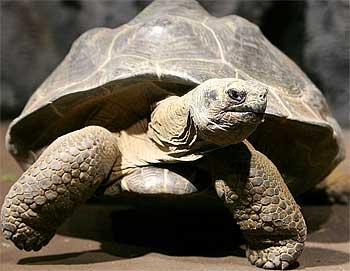 у чему снится черепаха