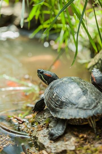 чему поучиться у черепах