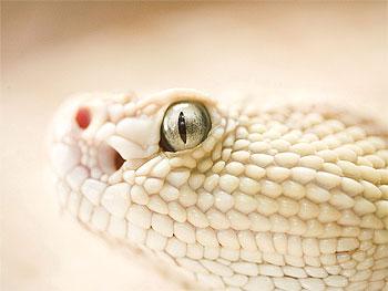 Змеиная жизнь: Чему поучиться?
