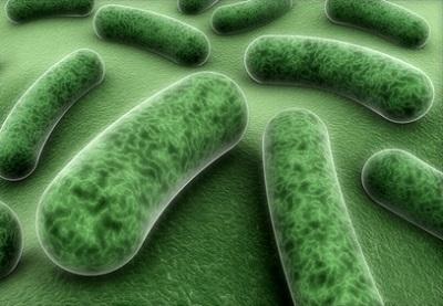 витамин В12 и бактерии